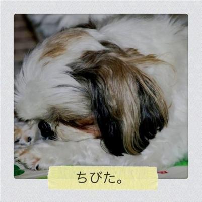 20110611-043219.jpg