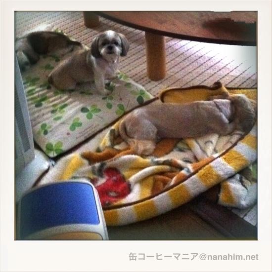 20110719-010808.jpg