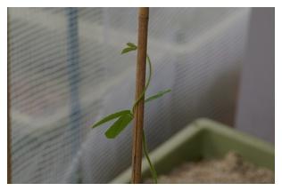 枝豆の様子