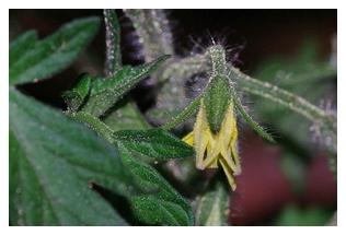 ロッソロッソのお花