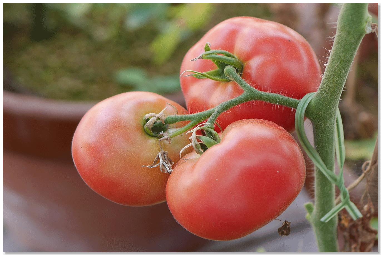 ほんとうに永田農法でおいしい野菜はできるのか?(永田農法日記)